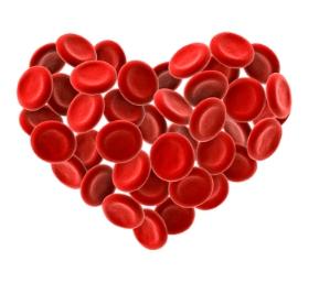 5 iznenađujučih činjenica o krvožilnom sustavu